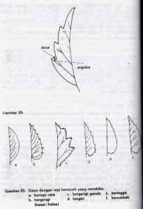 sinus-angulus